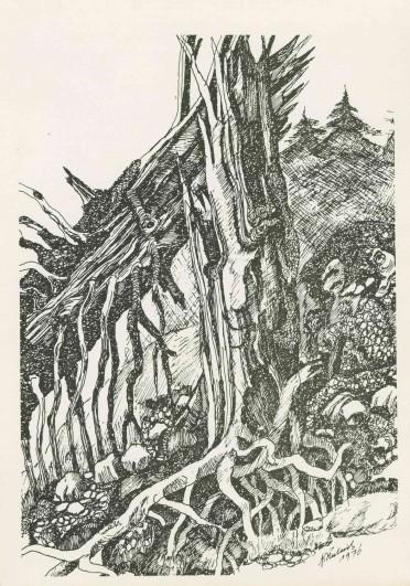 #7_Abgestorbener_Baum